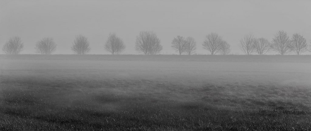 field covered in fog